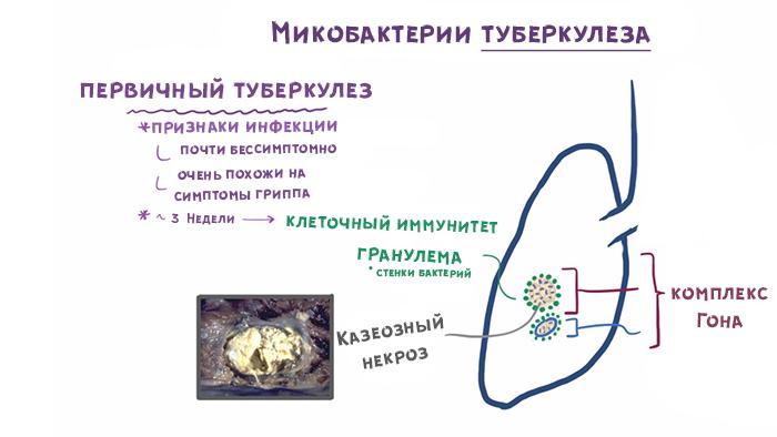 Четвертый слайд